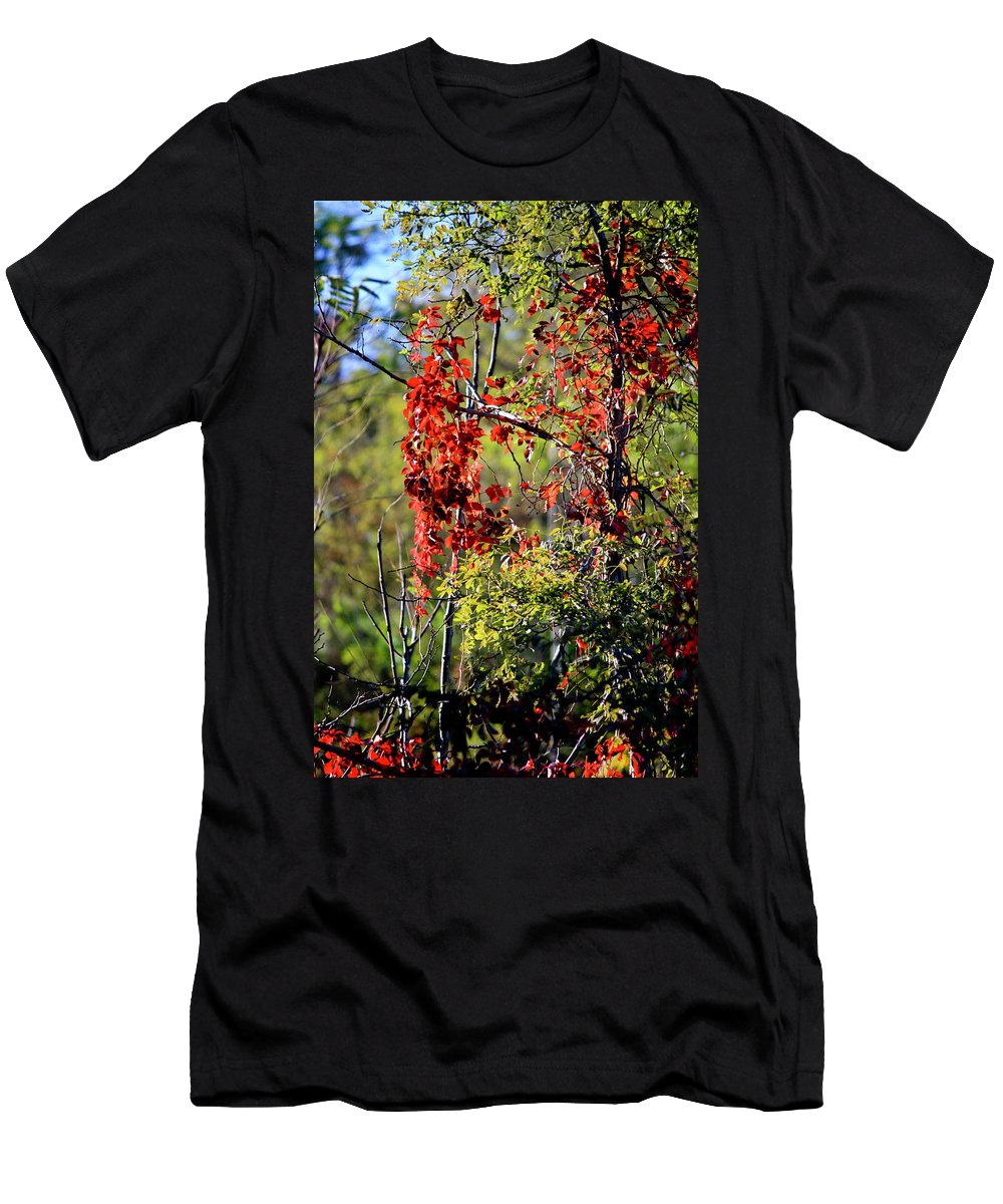Virginia Men's T-Shirt (Athletic Fit) featuring the photograph Virginia Creeper by Teresa Mucha