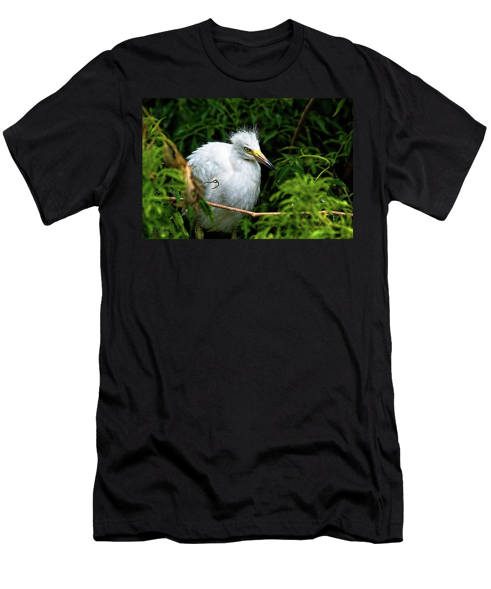 Egret Men's T-Shirt (Athletic Fit) featuring the photograph Waiting Patiently by Christopher Holmes