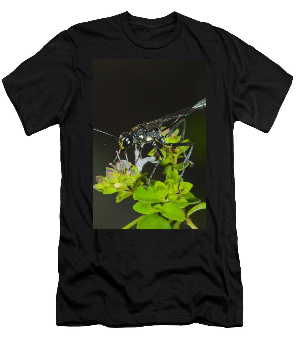 Macro Men's T-Shirt (Athletic Fit) featuring the photograph Wasp Visit by Csaba Vadasz