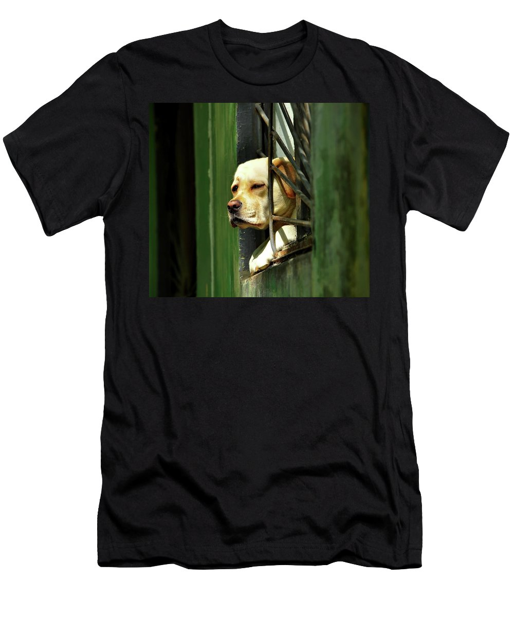 Dog Men's T-Shirt (Athletic Fit) featuring the photograph Watching From The Window by Pixabay