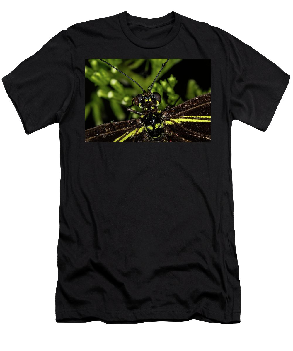 Jay Stockhaus Men's T-Shirt (Athletic Fit) featuring the photograph Wet Butterfly by Jay Stockhaus