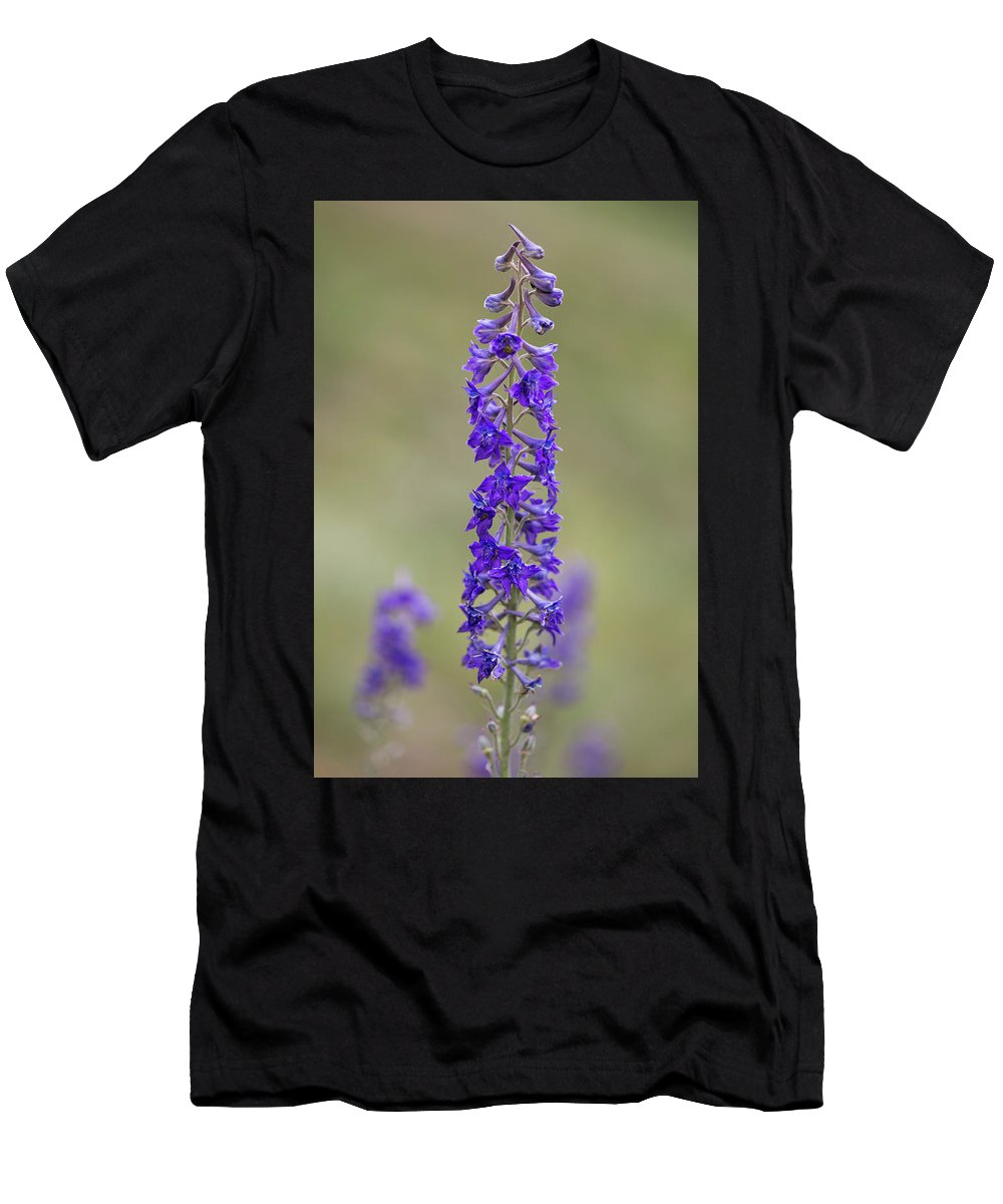 Crested Butte Men's T-Shirt (Athletic Fit) featuring the photograph Whipple's Penstemon by Meagan Watson