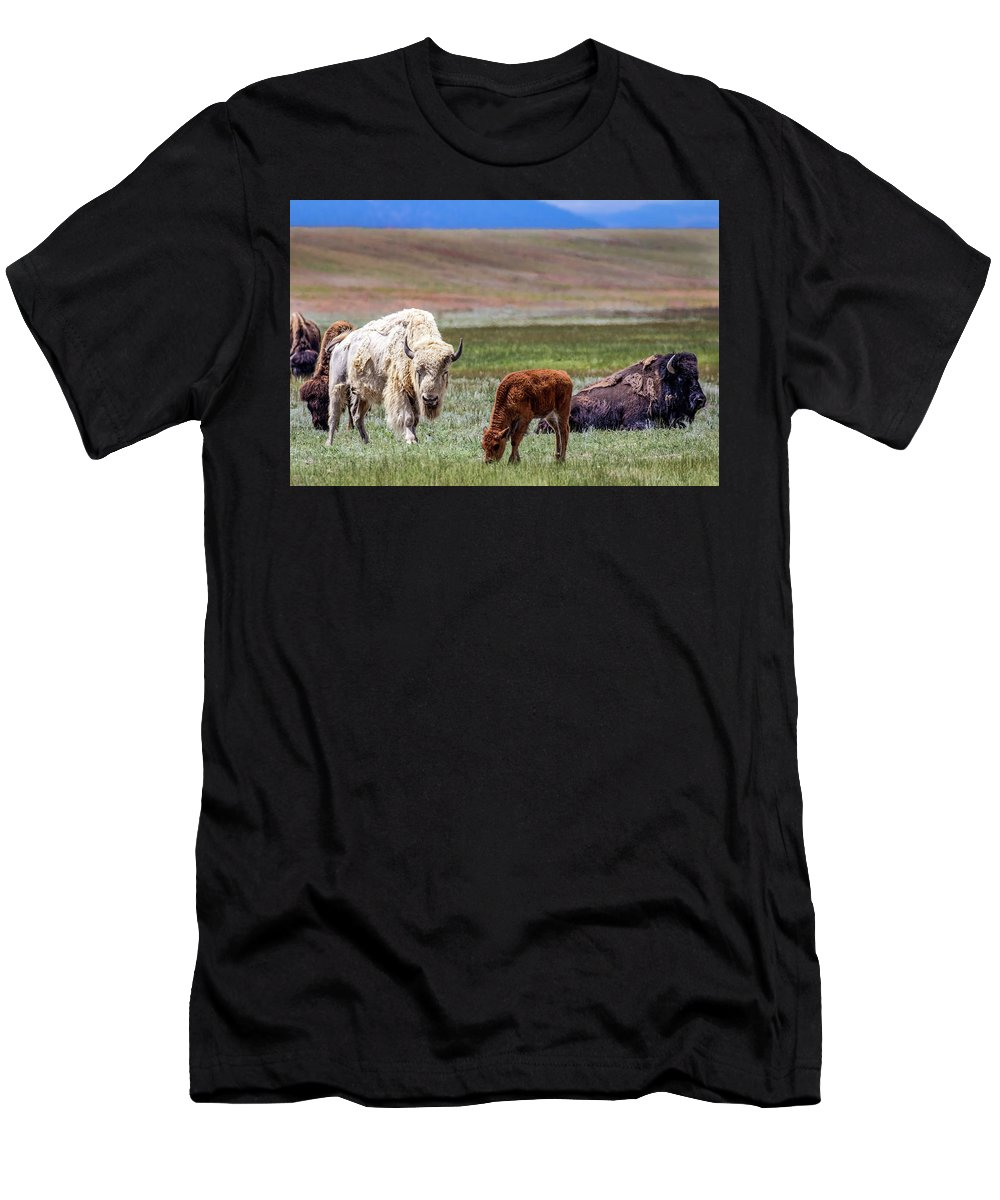 American Men's T-Shirt (Athletic Fit) featuring the photograph White Buffalo by Dawn Key