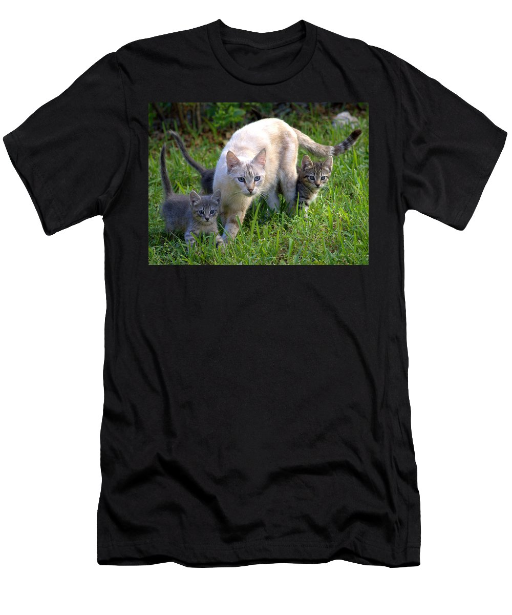 Cats Men's T-Shirt (Athletic Fit) featuring the photograph Wild Cats In Hialeah by Lenin Caraballo