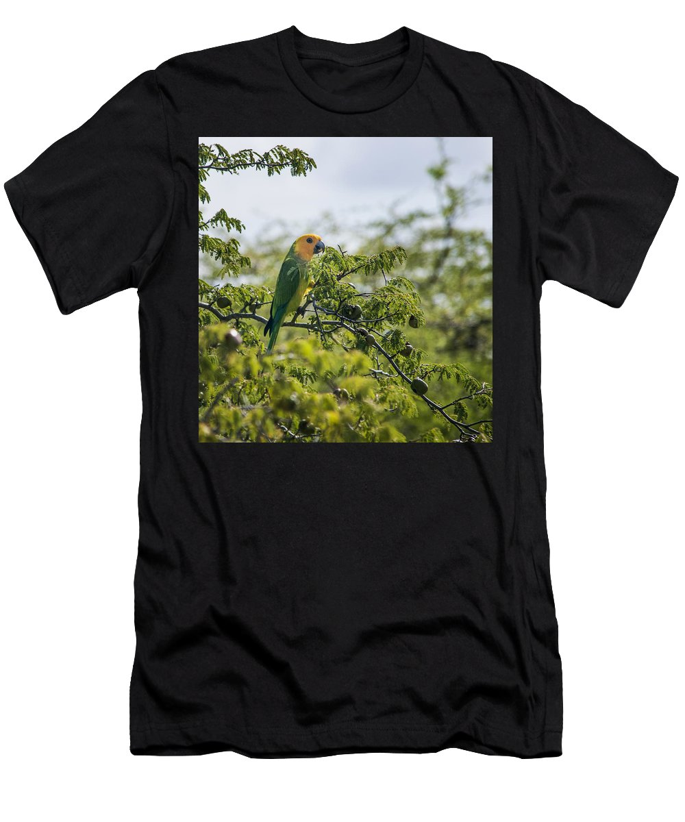 Parrot Men's T-Shirt (Athletic Fit) featuring the photograph Wild Parrot by Alida Thorpe