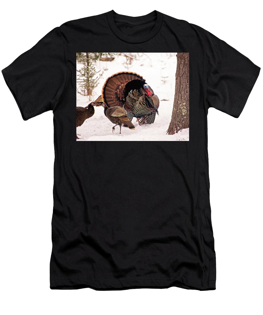 Wild Turkey Men's T-Shirt (Athletic Fit) featuring the photograph Wild Turkey Parade Print by Gwen Gibson