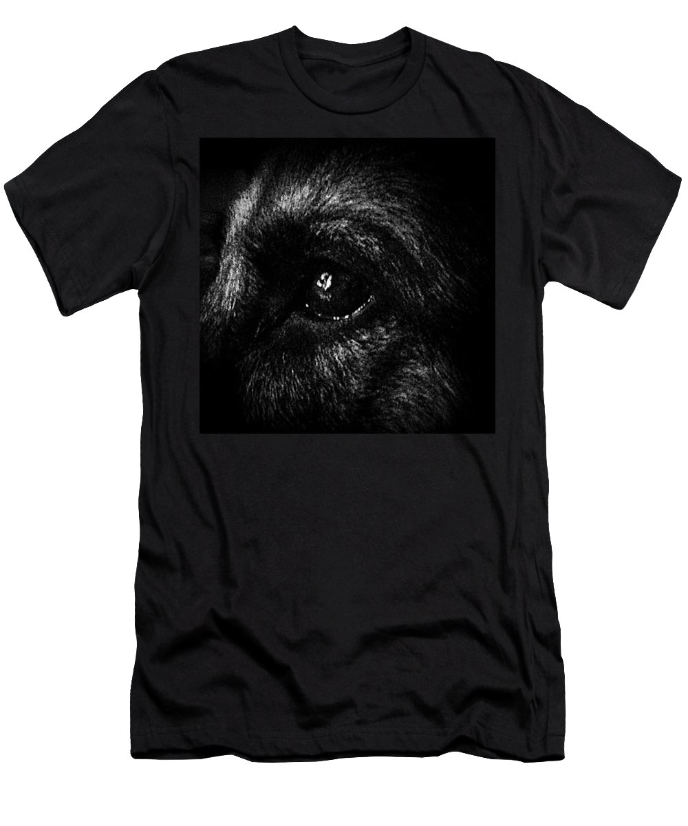 Dog T-Shirt featuring the photograph Window Light Reflection by Frank J Casella
