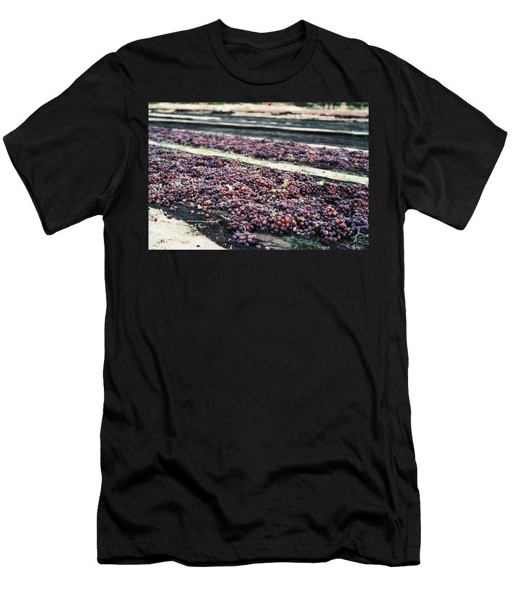 Grapes Men's T-Shirt (Athletic Fit) featuring the photograph Wine-ready by Briana M
