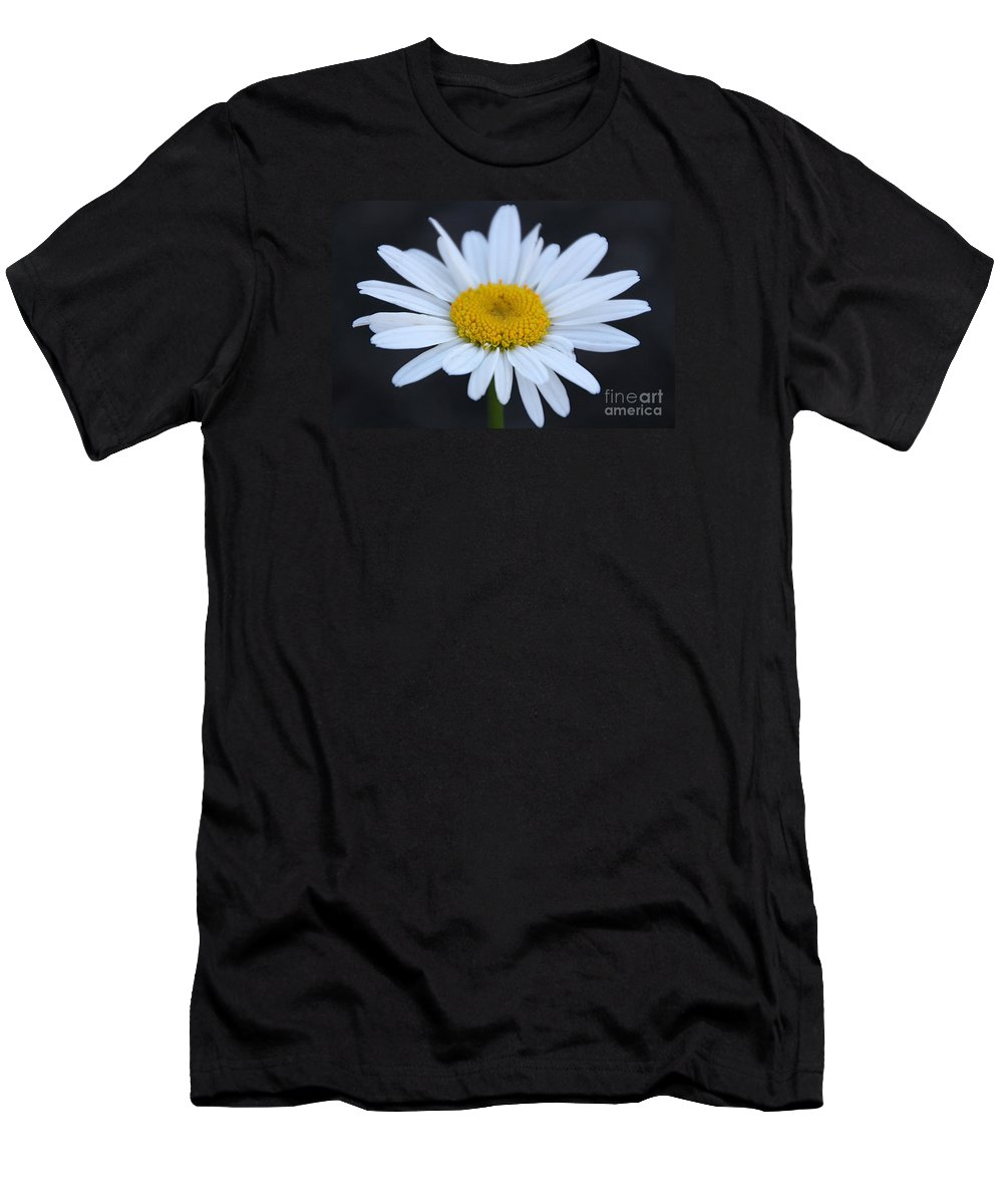 Daisy Men's T-Shirt (Athletic Fit) featuring the photograph Winter Daisy by Amy Steeples