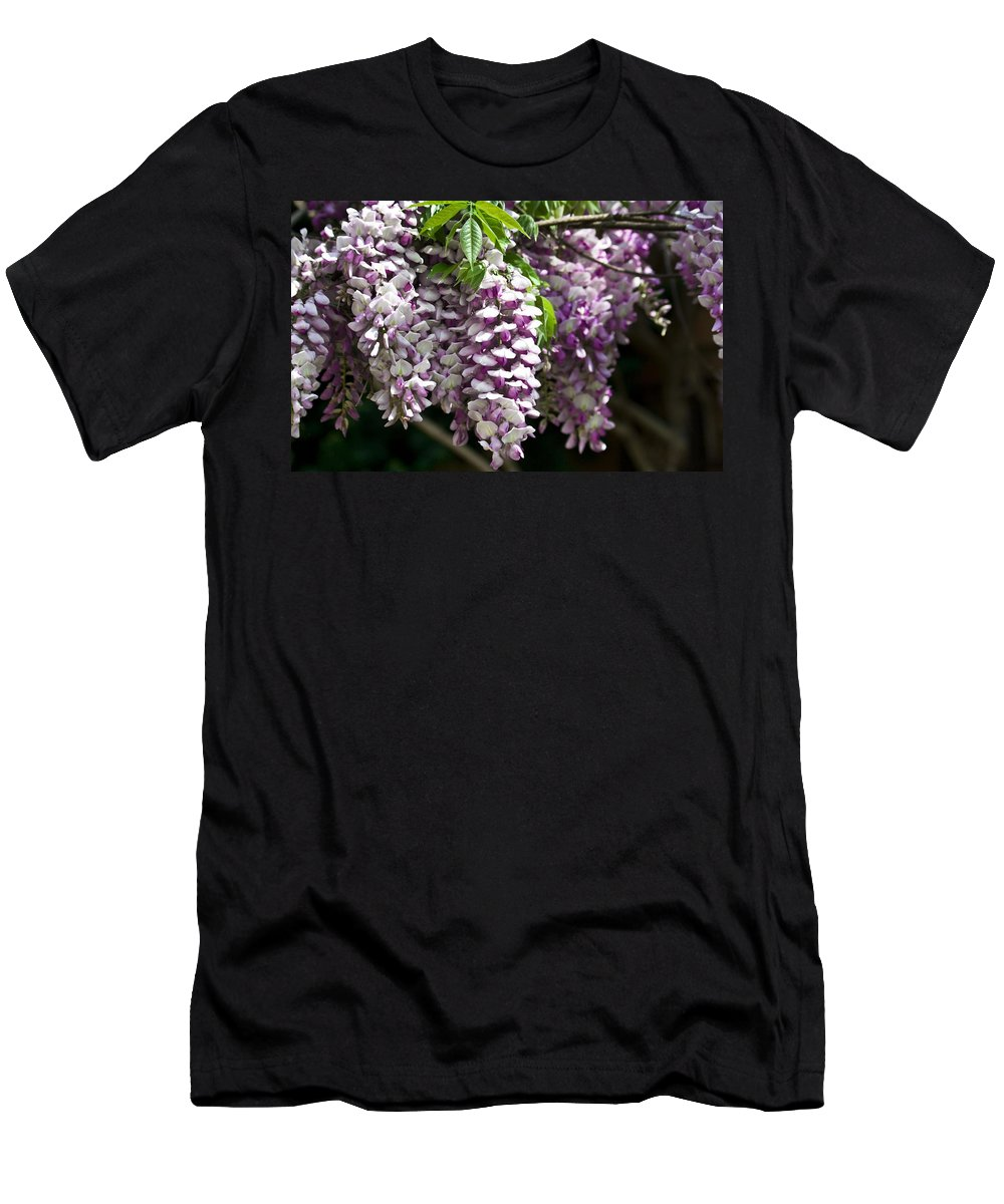 Wisteria Men's T-Shirt (Athletic Fit) featuring the photograph Wisteria by Teresa Mucha