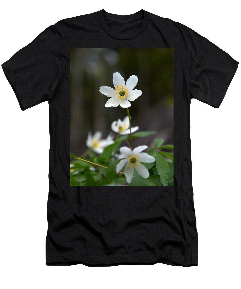 Lehtokukka Men's T-Shirt (Athletic Fit) featuring the photograph Wood Anemone by Jouko Lehto