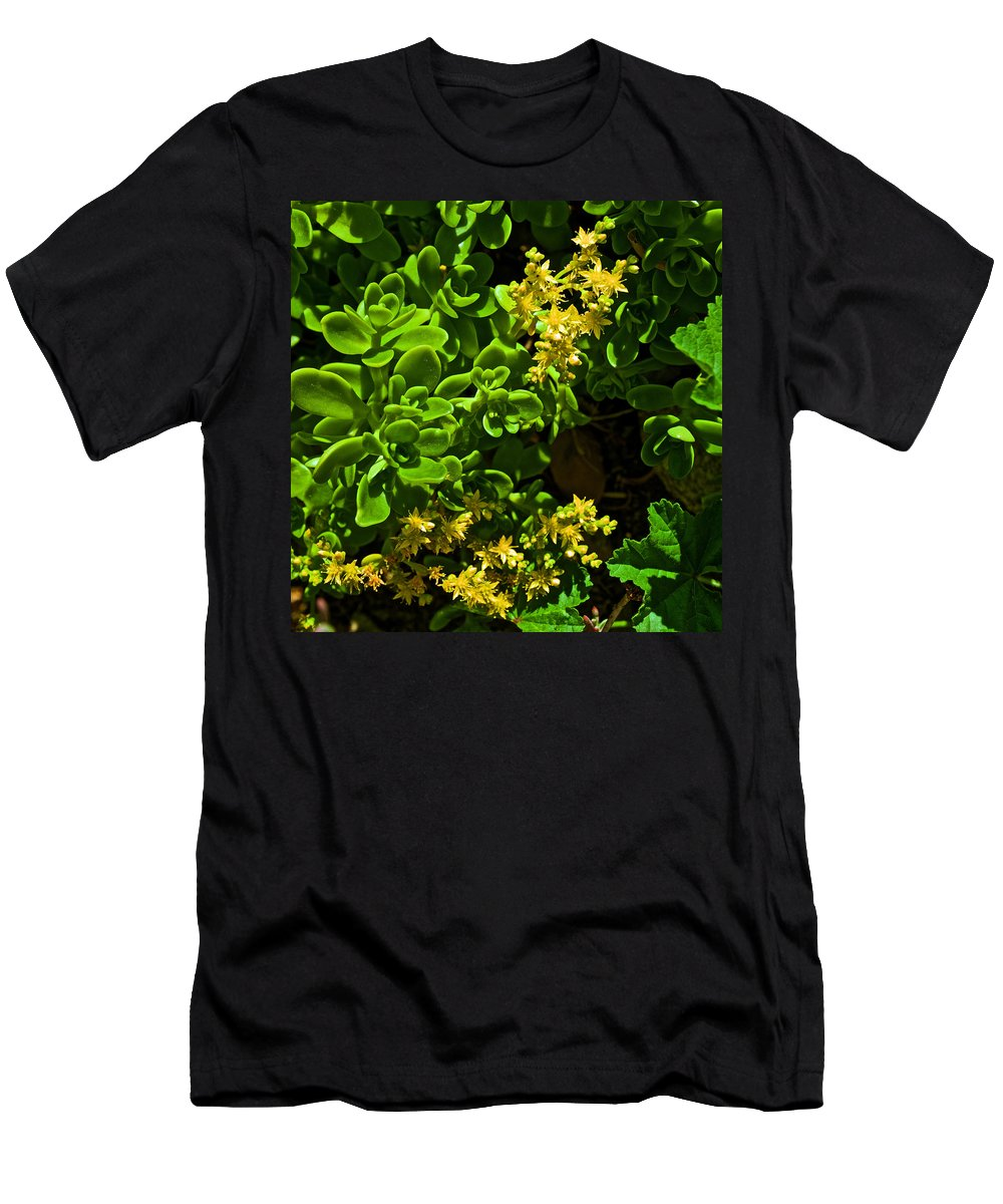 Yellow Sedum At Pilgrim Place In Claremont Men's T-Shirt (Athletic Fit) featuring the photograph Yellow Sedum At Pilgrim Place In Claremont-california by Ruth Hager