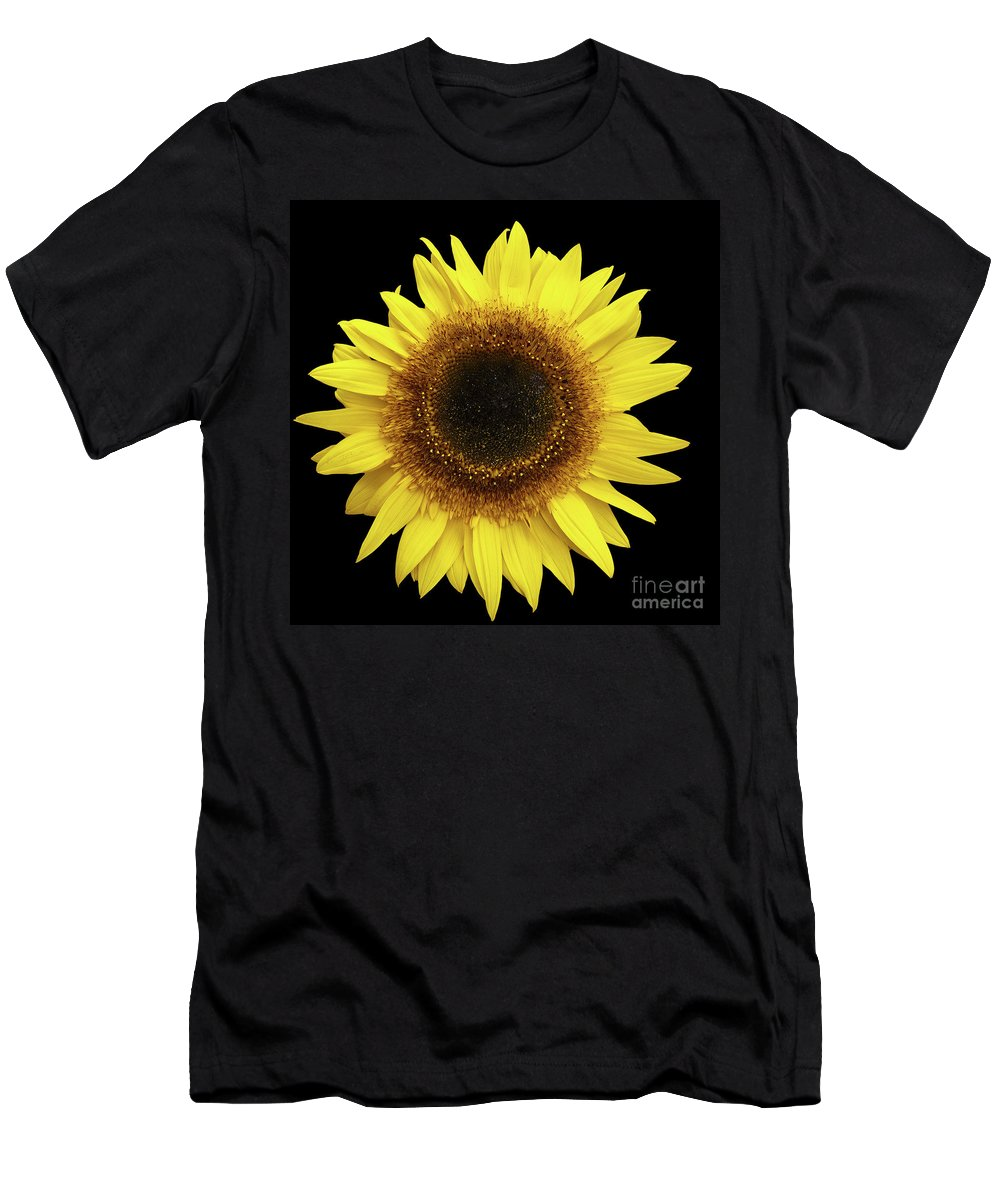 Plant Men's T-Shirt (Athletic Fit) featuring the photograph Yellow Sunflower Isolated On Black Background 8 by Valdis Veinbergs