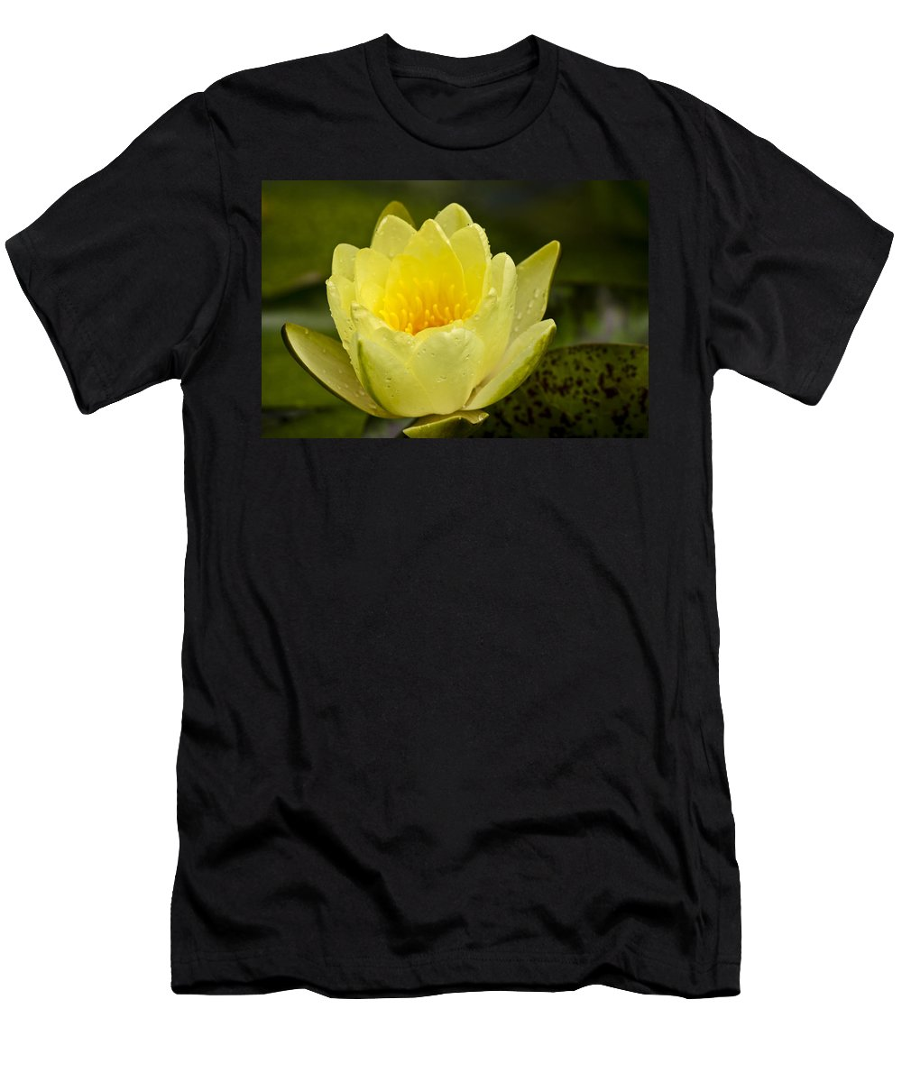 J Paul Getty Men's T-Shirt (Athletic Fit) featuring the photograph Yellow Water Lilly by Teresa Mucha