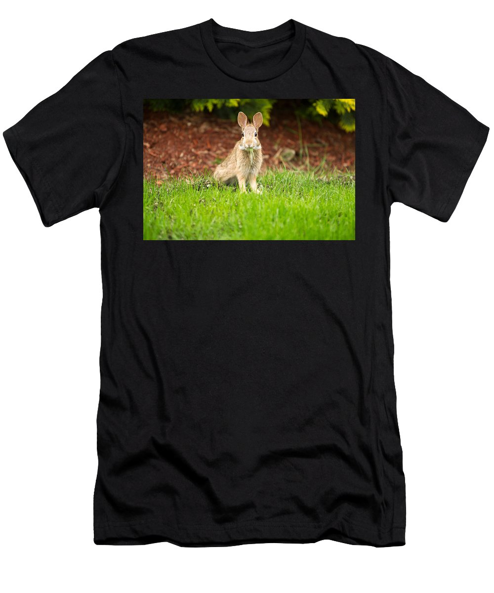 Rabbit Men's T-Shirt (Athletic Fit) featuring the photograph Young Healthy Wild Rabbit Eating Fresh Grass From Yard by Thomas Baker