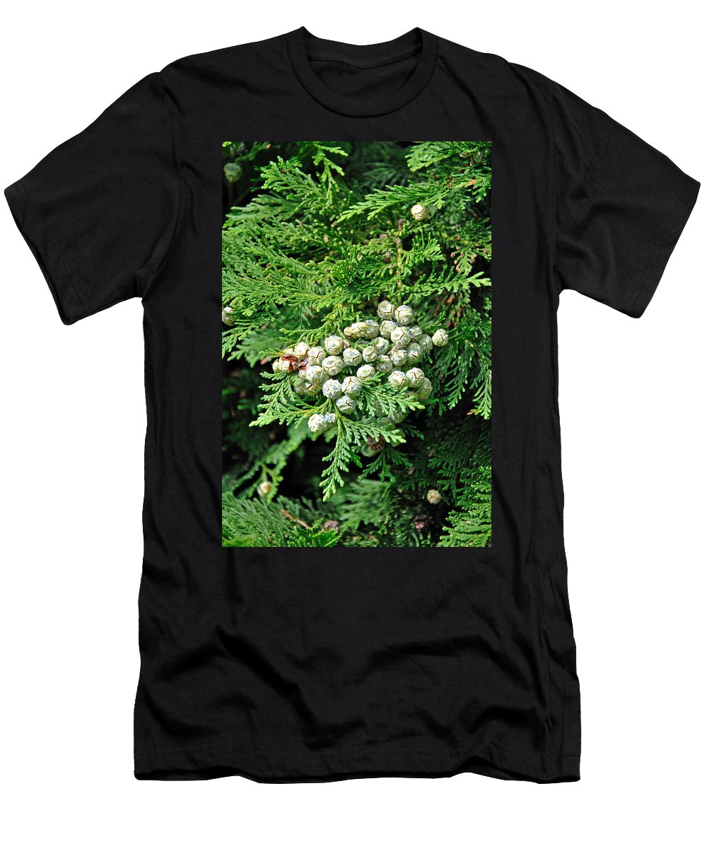 Stapenhill Men's T-Shirt (Athletic Fit) featuring the photograph Young Seed Cones Of Lawson Cypress by Rod Johnson
