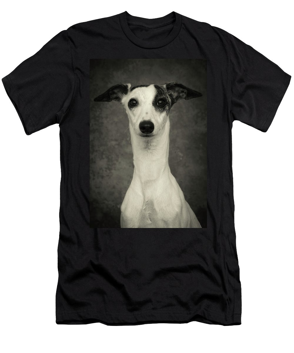 Whippet Men's T-Shirt (Athletic Fit) featuring the photograph Young Whippet In Black And White by Greg and Chrystal Mimbs