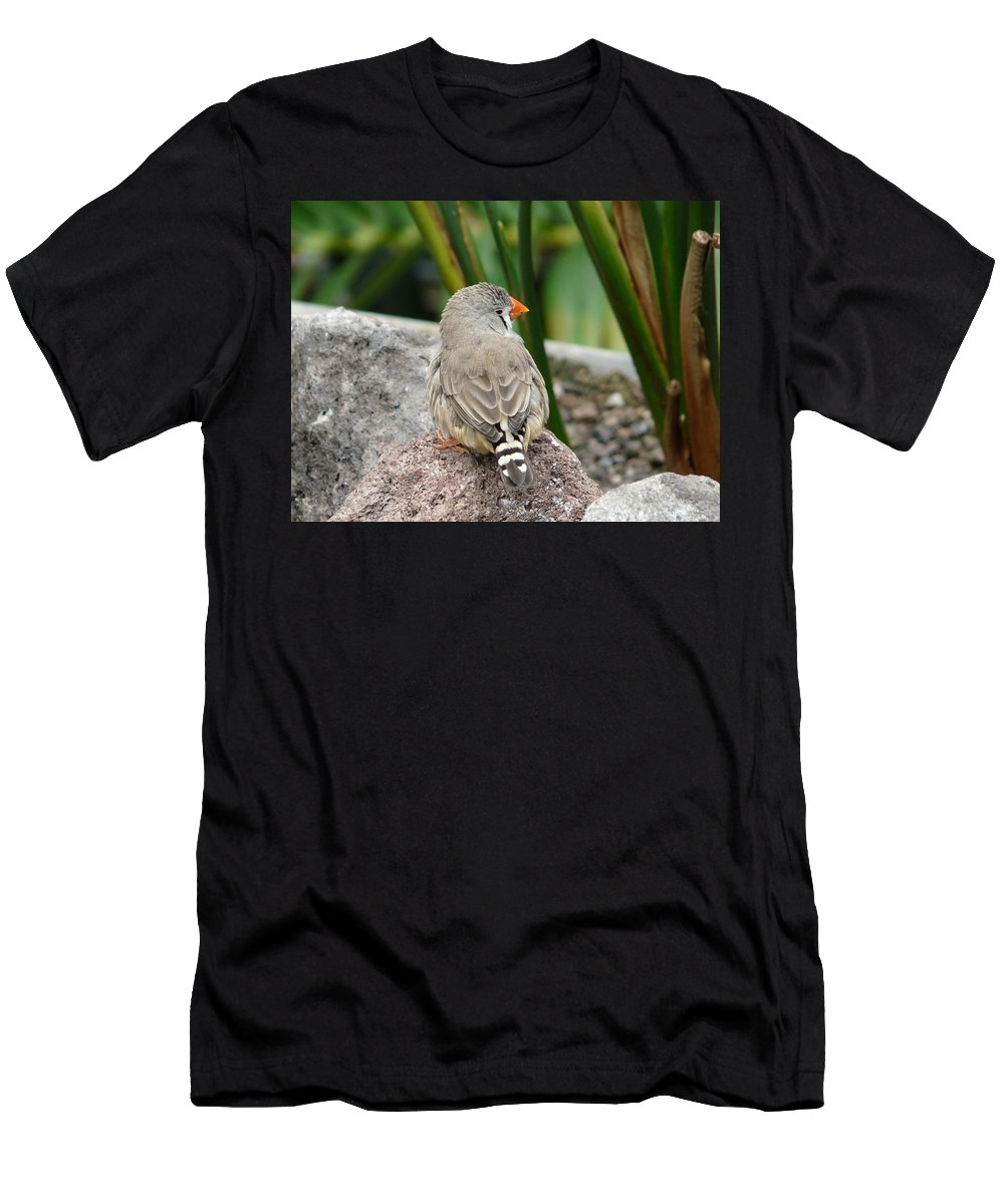 Bird Men's T-Shirt (Athletic Fit) featuring the photograph Zebra Finch by Valerie Ornstein