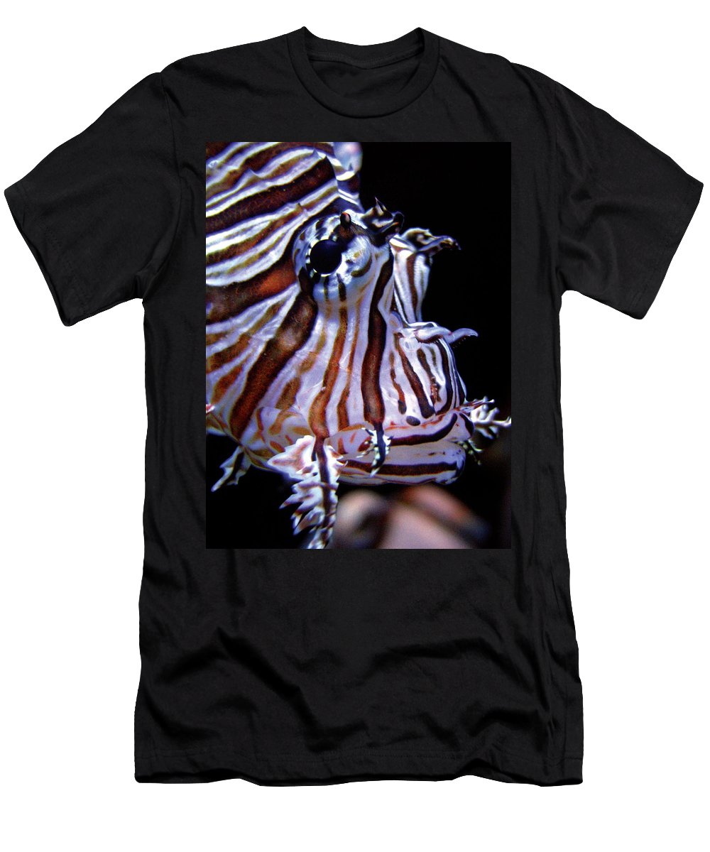 Fish Men's T-Shirt (Athletic Fit) featuring the photograph Zebra Fish by Denise Keegan Frawley