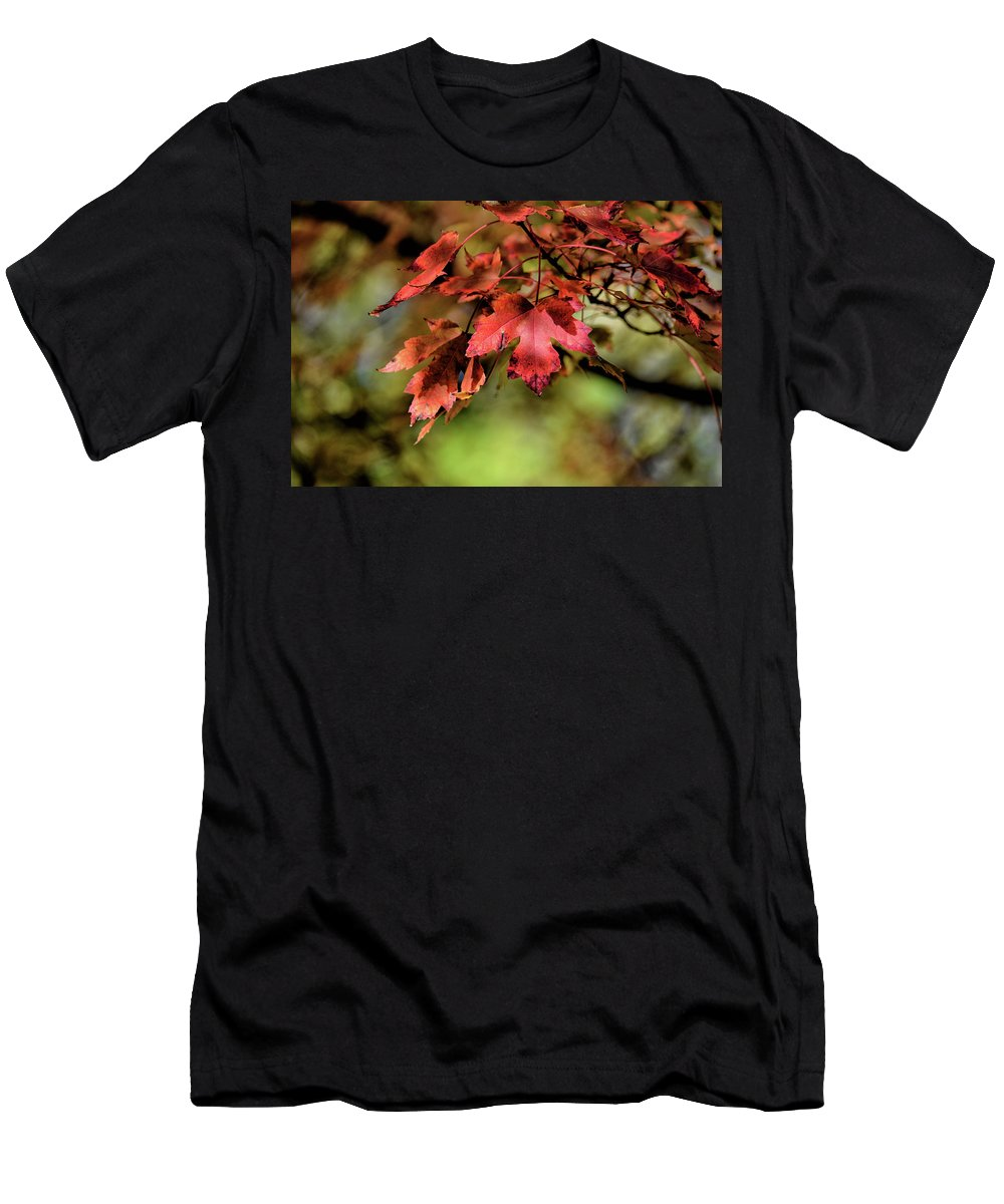 Maple Leaf Men's T-Shirt (Athletic Fit) featuring the photograph Colours Turning by Maria Keady