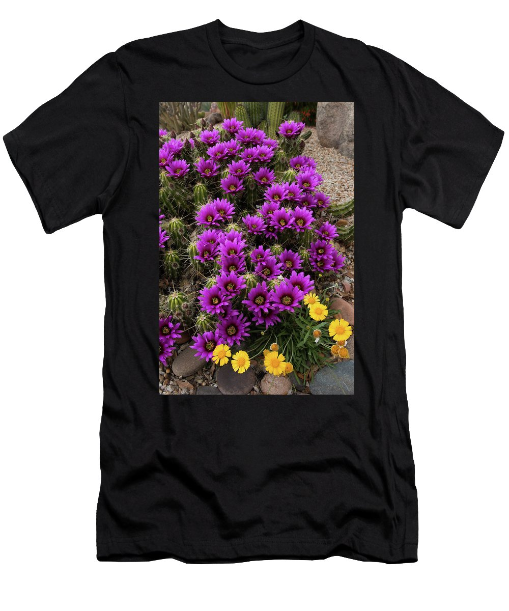 Arizona Men's T-Shirt (Athletic Fit) featuring the photograph Hedgehog Cactus And Yellow Daisies by Rolf Jacobson