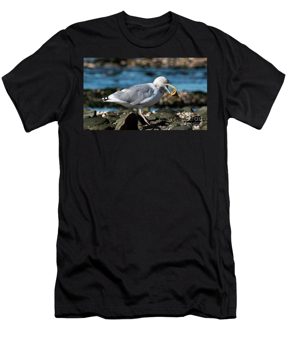 Silver Sands Men's T-Shirt (Athletic Fit) featuring the photograph Seagull Carrying Snail by Michael D Miller