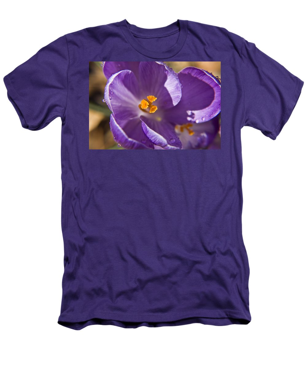 Crocus Men's T-Shirt (Athletic Fit) featuring the photograph Purple Spring Crocus by Teresa Mucha