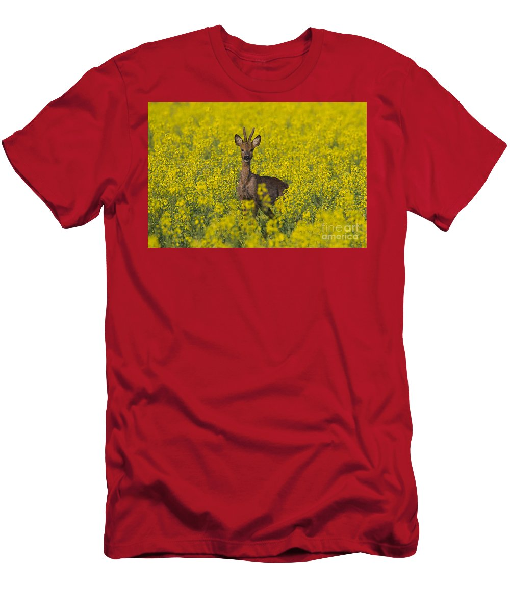 Roe Deer Men's T-Shirt (Athletic Fit) featuring the photograph 110714p142 by Arterra Picture Library