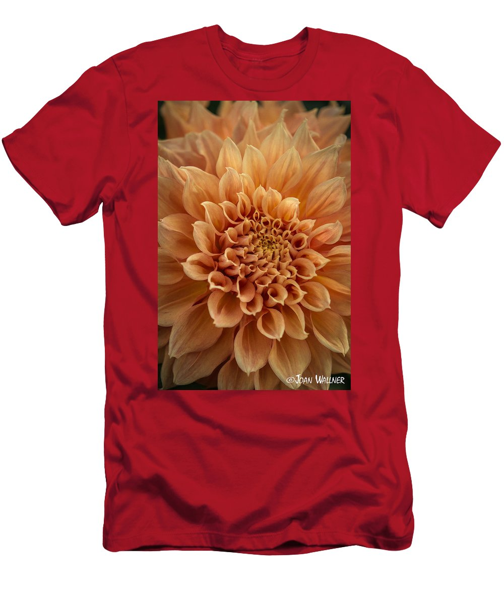 Dahlia Men's T-Shirt (Athletic Fit) featuring the photograph Apricot Dahlia by Joan Wallner