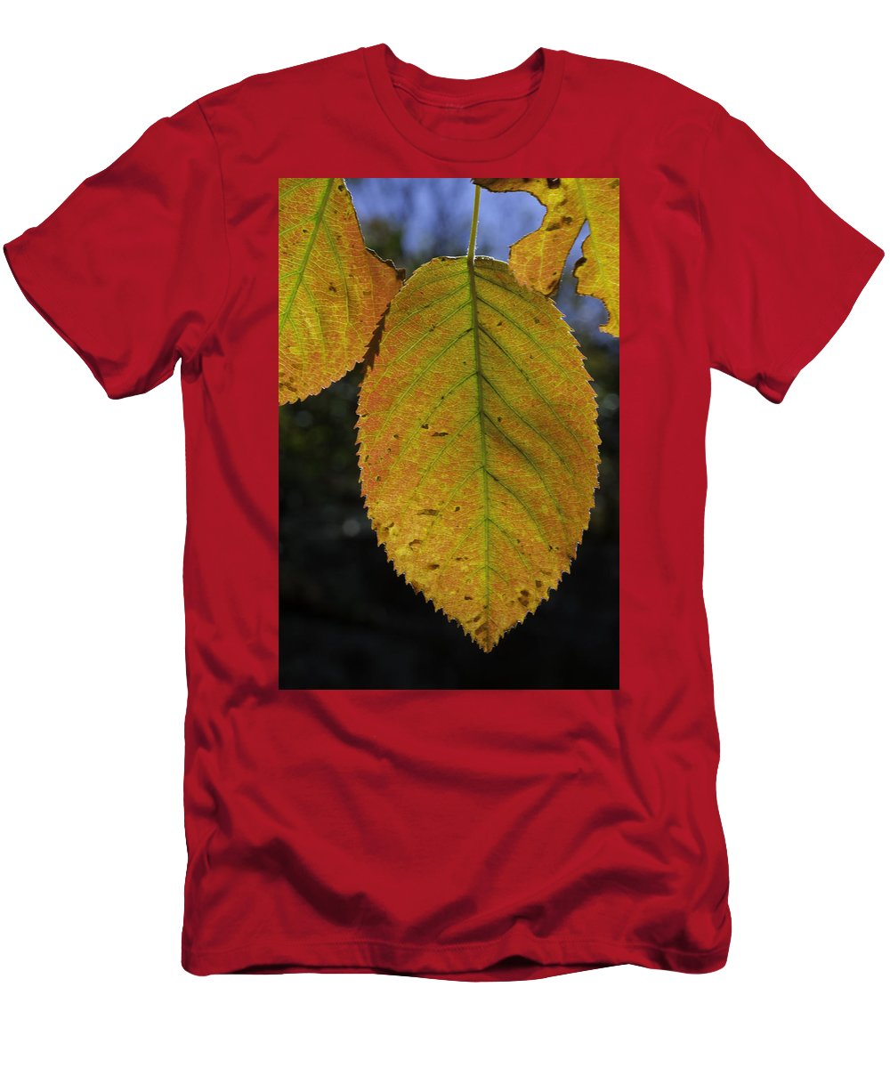 Orange Men's T-Shirt (Athletic Fit) featuring the photograph Autumn Leaf by David Freuthal