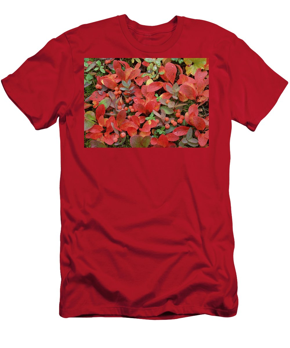 Feb0514 Men's T-Shirt (Athletic Fit) featuring the photograph Bearberry In Autumn Yukon Canada by Tim Fitzharris