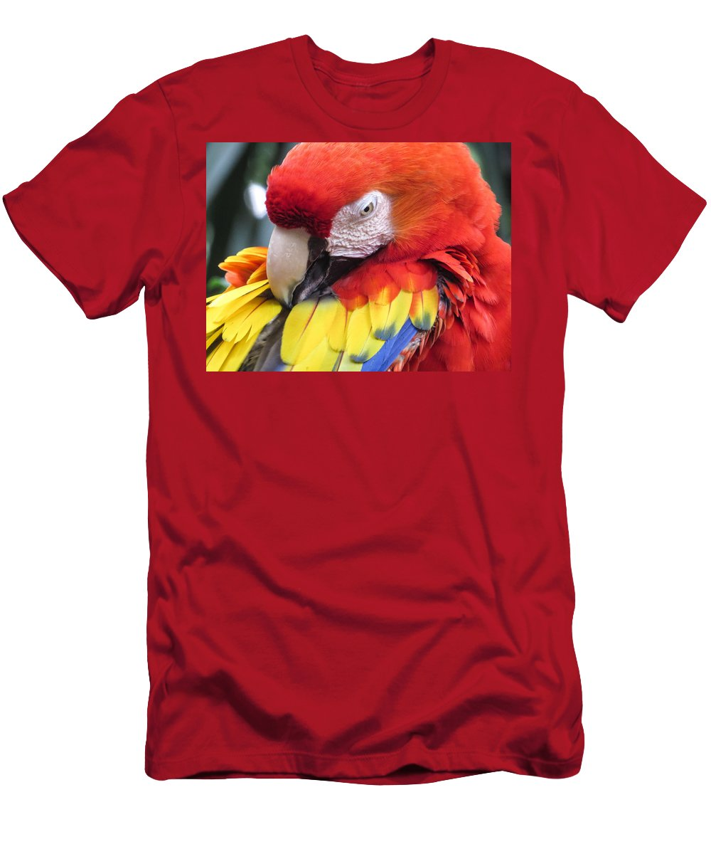 Parrot Men's T-Shirt (Athletic Fit) featuring the photograph Beauty Scarlet by Zina Stromberg
