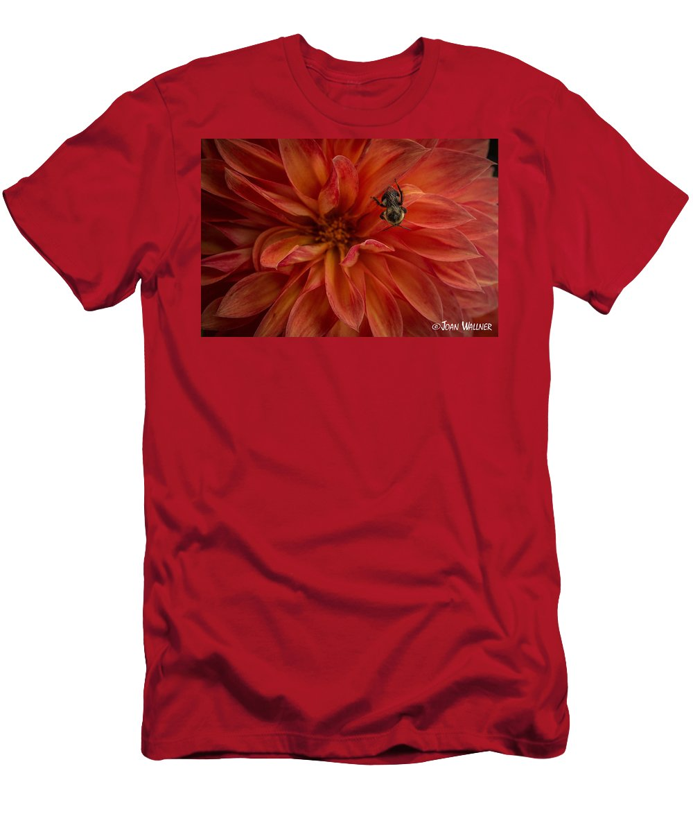 Dahlia Men's T-Shirt (Athletic Fit) featuring the photograph Brilliant Red Dahlia by Joan Wallner