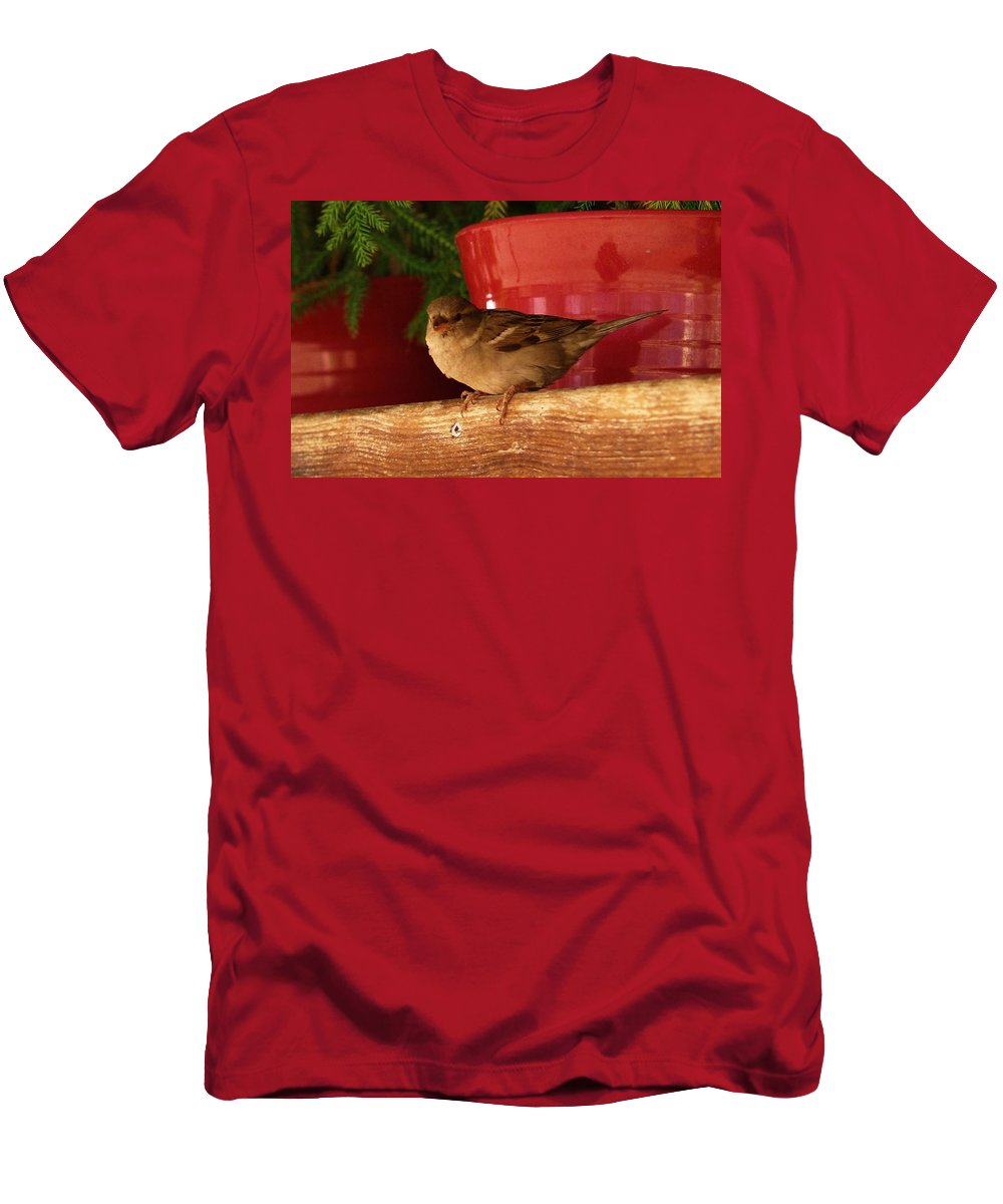Nature Men's T-Shirt (Athletic Fit) featuring the photograph Christmas Finch by Dale Cash