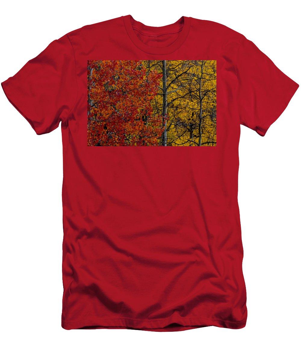 Autumn Men's T-Shirt (Athletic Fit) featuring the photograph Color Changes by Ernie Echols