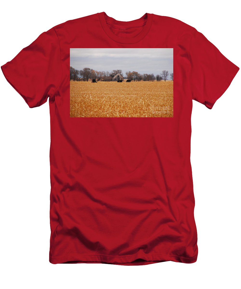 Landscape Men's T-Shirt (Athletic Fit) featuring the photograph Cows In The Corn by Mary Carol Story