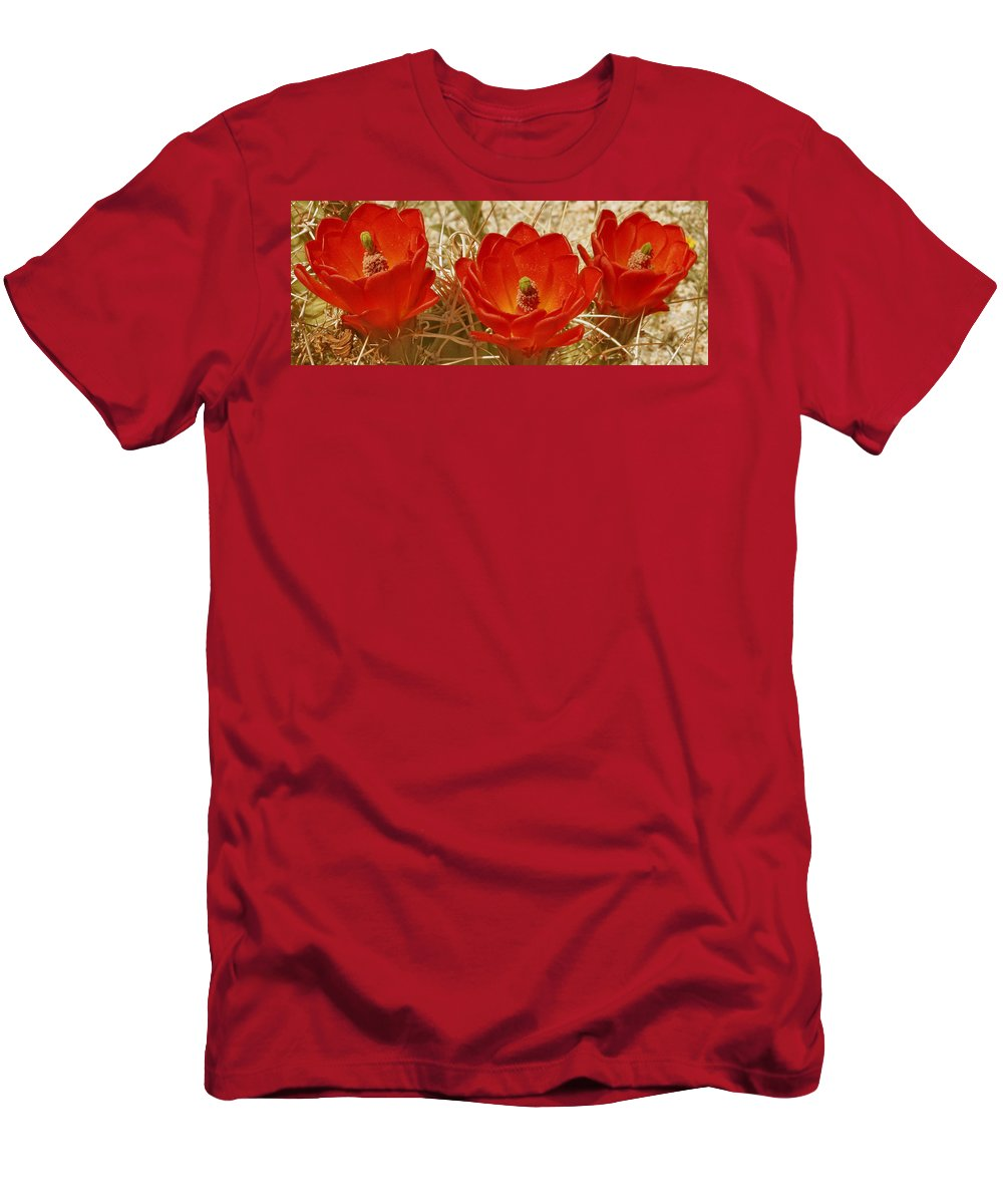 Red Cactus Flower Men's T-Shirt (Athletic Fit) featuring the photograph Desert Blooms by Ben and Raisa Gertsberg