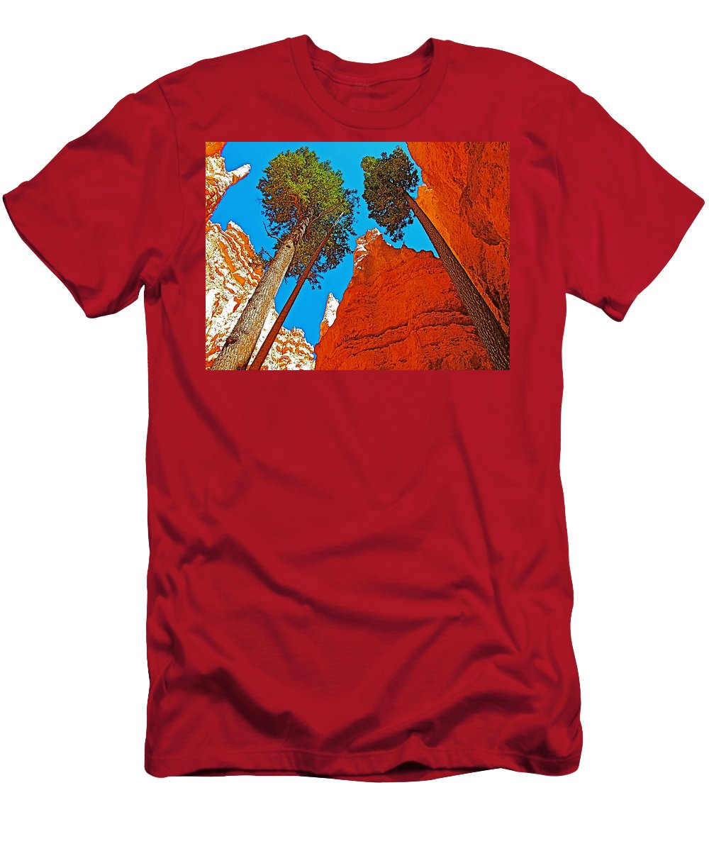 Douglas Firs On Wall Street On Navajo Trail In Bryce Canyon Men's T-Shirt (Athletic Fit) featuring the photograph Douglas Firs On Wall Street On Navajo Trail In Bryce Canyon National Park-utah by Ruth Hager