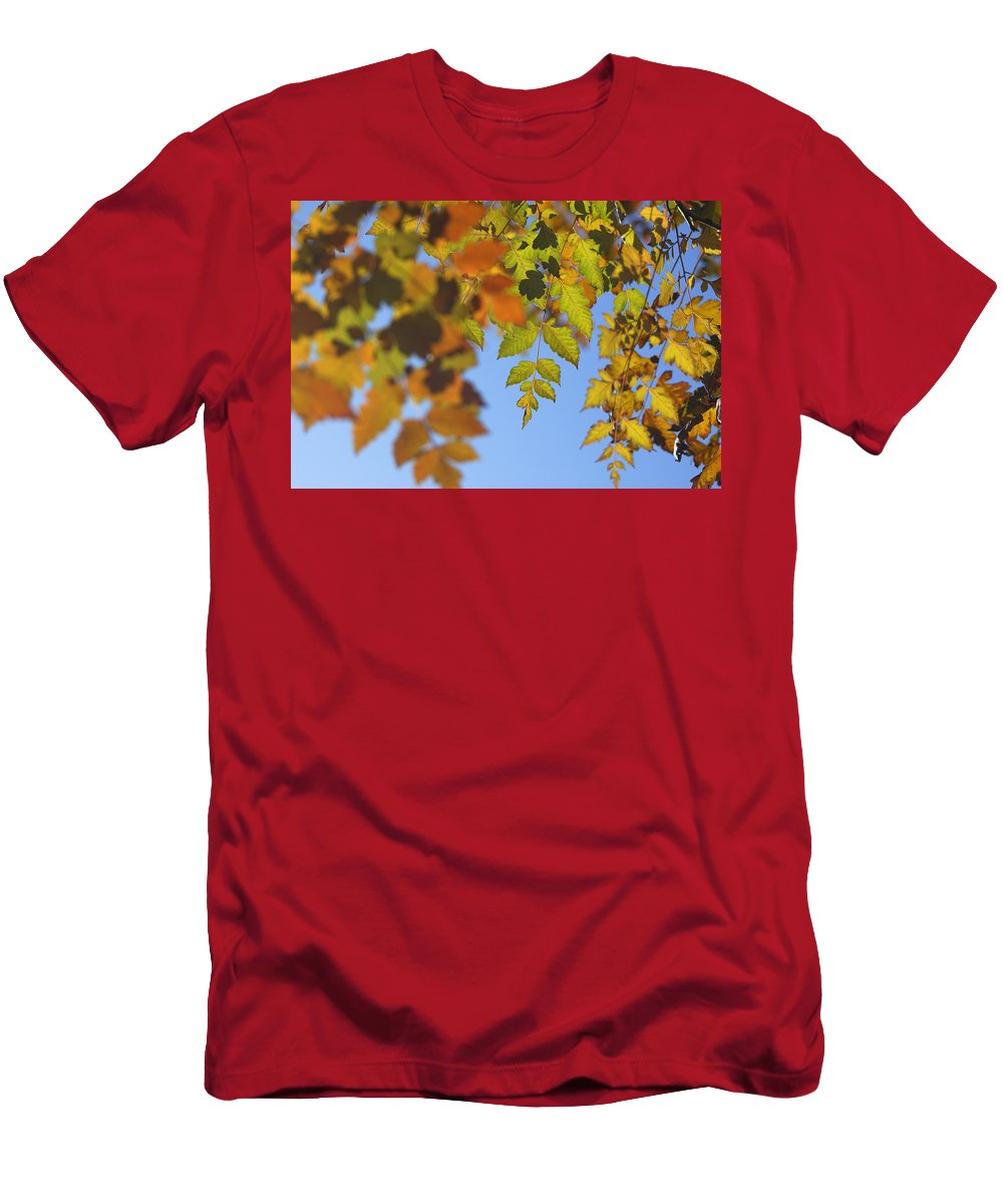 Tree Men's T-Shirt (Athletic Fit) featuring the photograph Fall Time by Guido Montanes Castillo