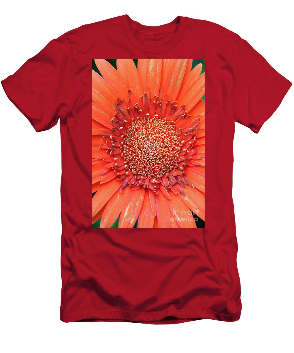 Flower Men's T-Shirt (Athletic Fit) featuring the photograph Gerber Baby by Jamie Smith