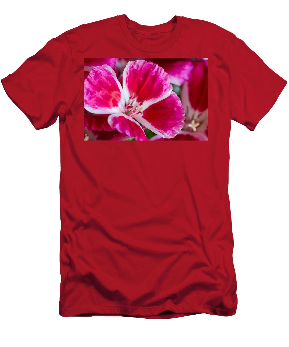 Godetia Men's T-Shirt (Athletic Fit) featuring the photograph Godetia Pink And White Flower by Michael Moriarty