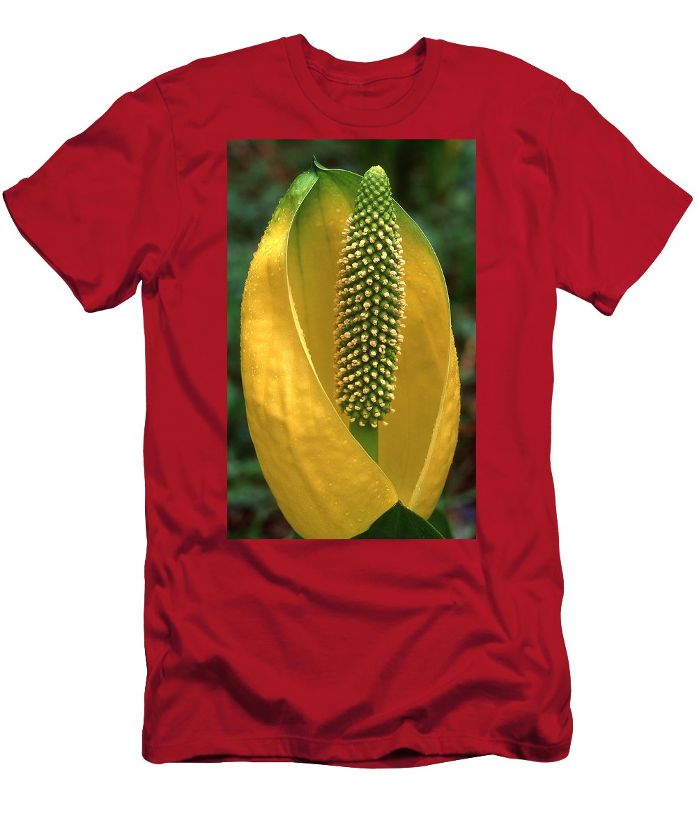Flowers Men's T-Shirt (Athletic Fit) featuring the photograph Golden Glow by Ginny Barklow
