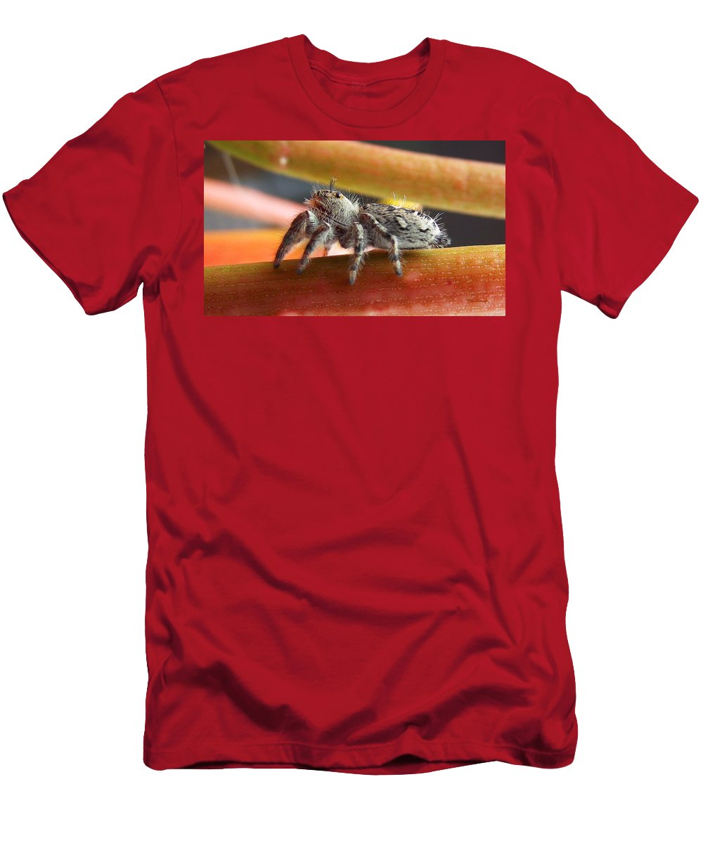 Duane Mccullough Men's T-Shirt (Athletic Fit) featuring the photograph Jumper Spider by Duane McCullough