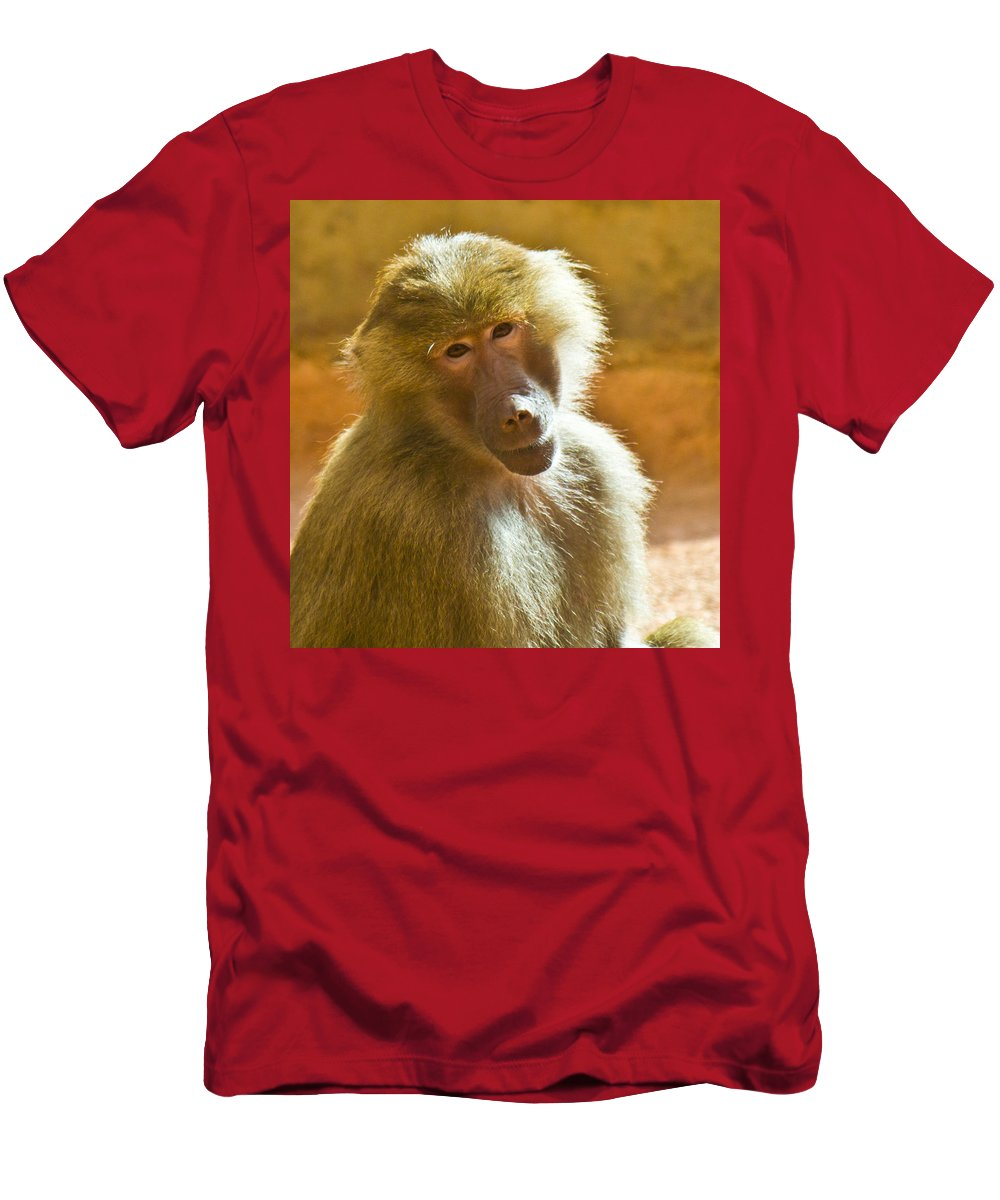 Baboon Men's T-Shirt (Athletic Fit) featuring the photograph Looking At You. by Jonny D