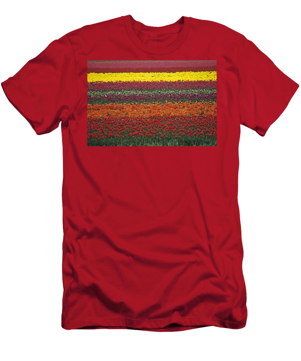 Travel Men's T-Shirt (Athletic Fit) featuring the photograph Mult-colored Tulip Field by Jim Corwin