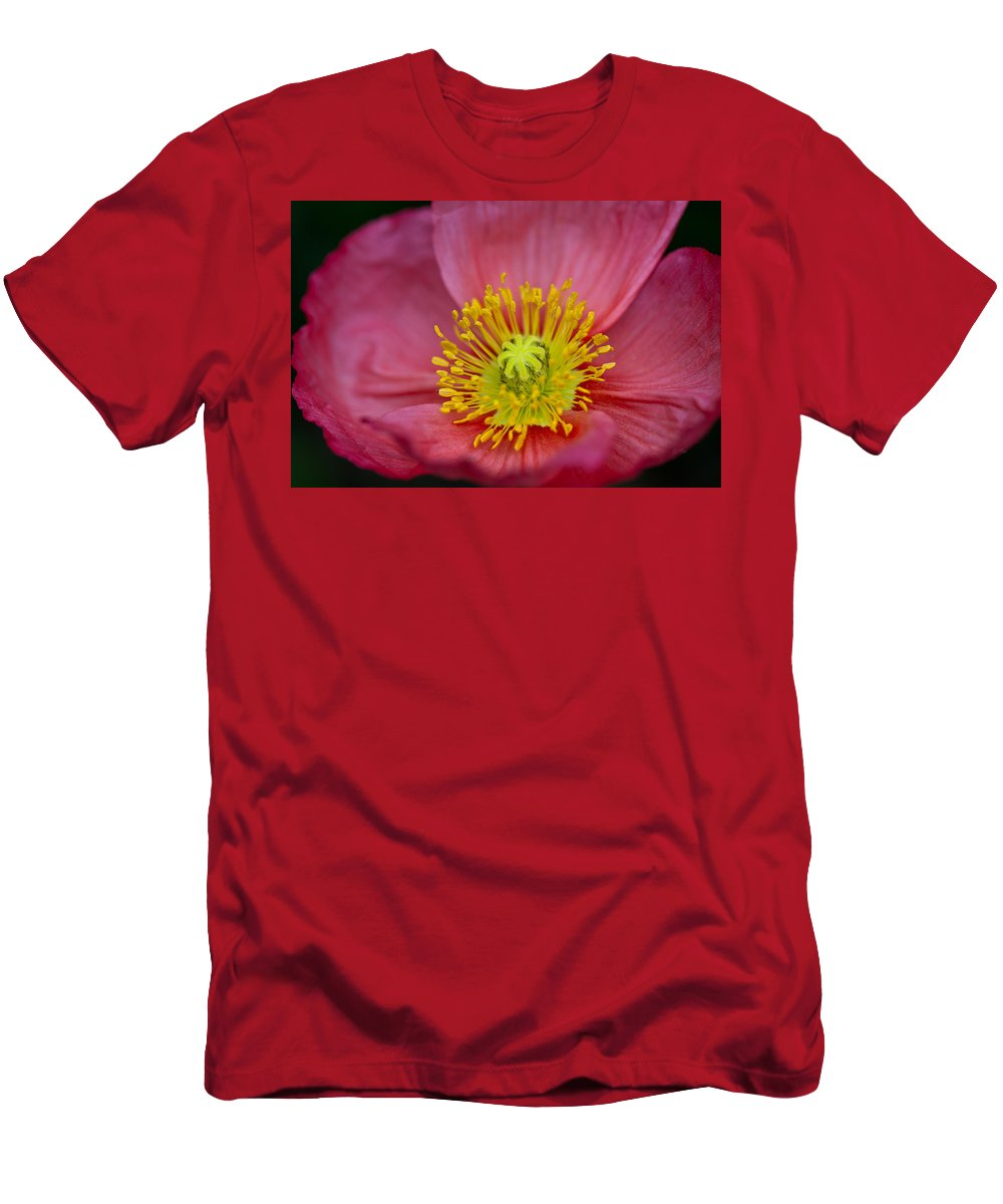 Poppy Men's T-Shirt (Athletic Fit) featuring the photograph Pink Poppy Rhapsody by Eti Reid