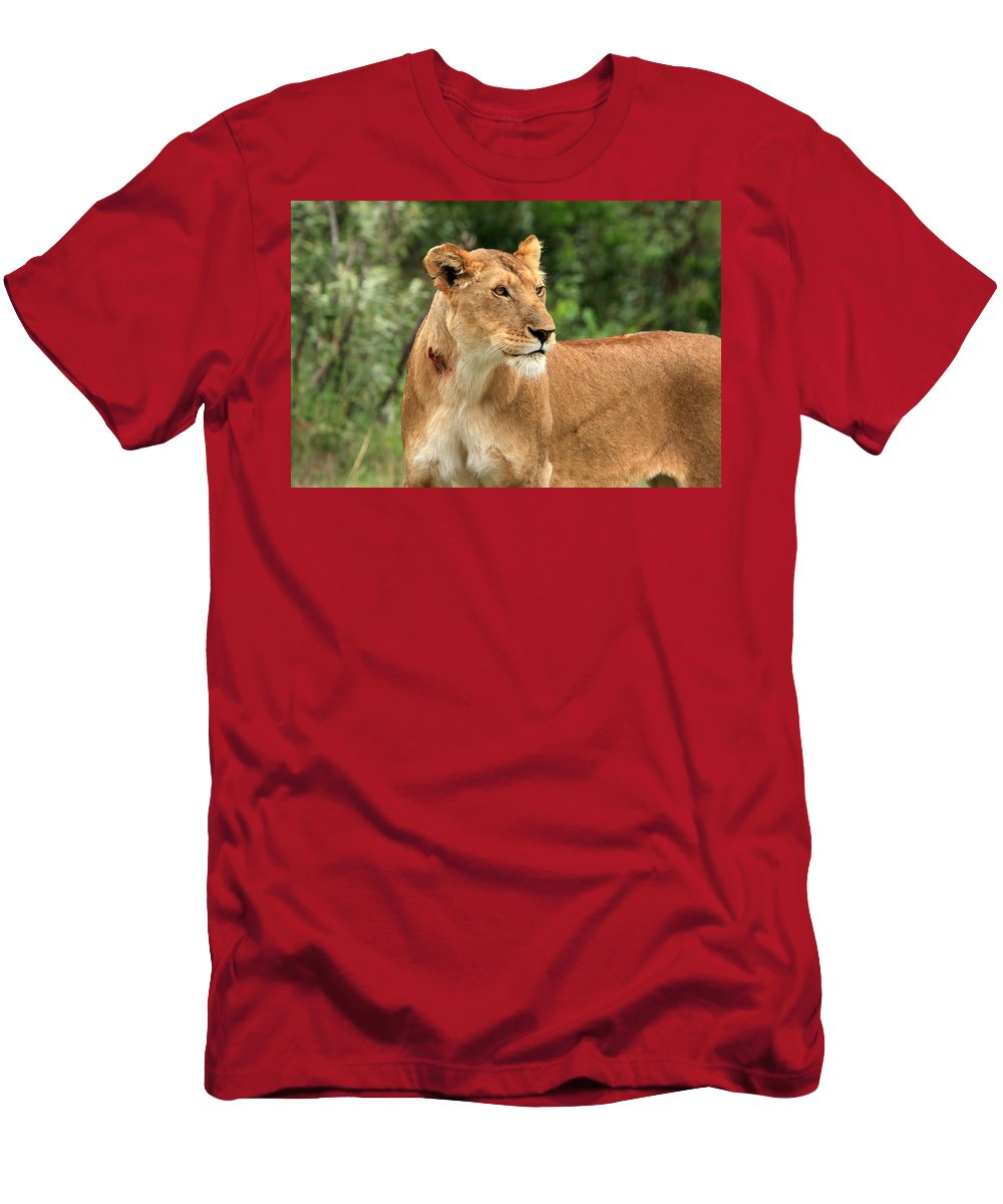 Africa Men's T-Shirt (Athletic Fit) featuring the photograph Proud Lioness by Aidan Moran
