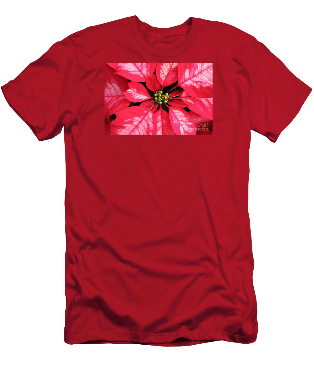 Poinsettia Men's T-Shirt (Athletic Fit) featuring the photograph Red And White Poinsettia by Judy Whitton