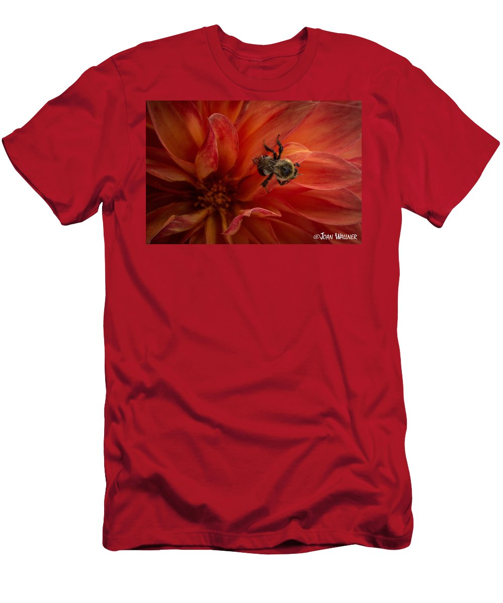Dahlia Men's T-Shirt (Athletic Fit) featuring the photograph Sunset Red Dahlia by Joan Wallner