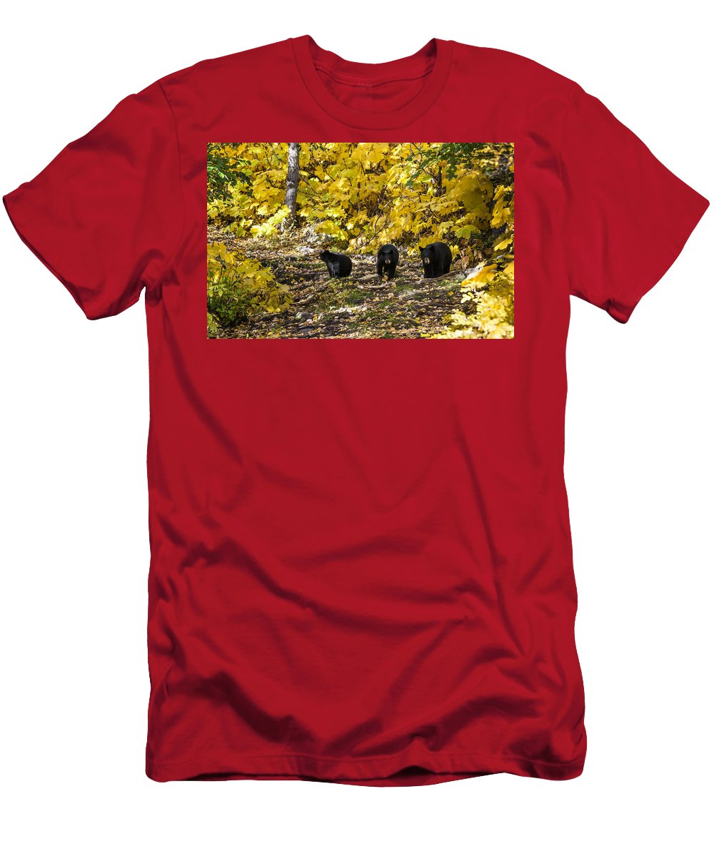 Bear Men's T-Shirt (Athletic Fit) featuring the photograph The Three Bears by Ted Raynor